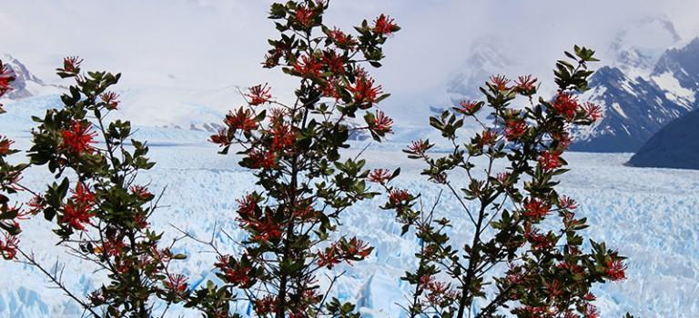 Argentinië: gletsjers, watervallen en biefstuk