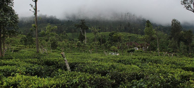 Beau-tea-ful Sri Lanka